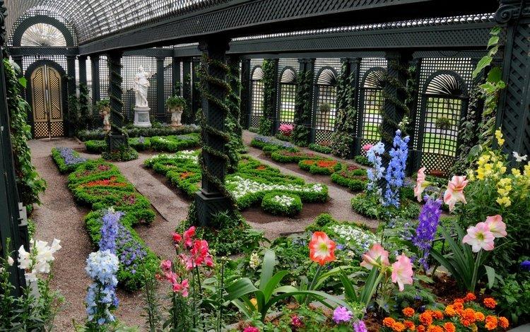 цветы, оранжерея, зимний сад, flowers, greenhouse, winter garden