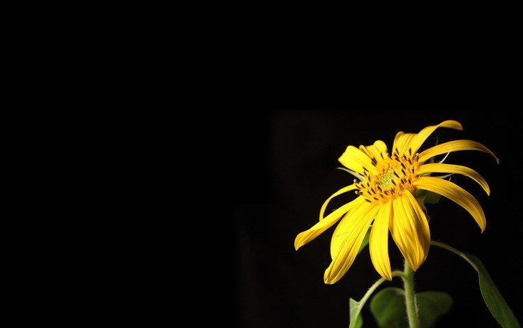 cvety, oboi, makro, fotografii, kartinki
