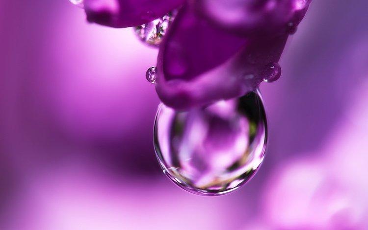 joni niemela, cvety, makro, kaplya
