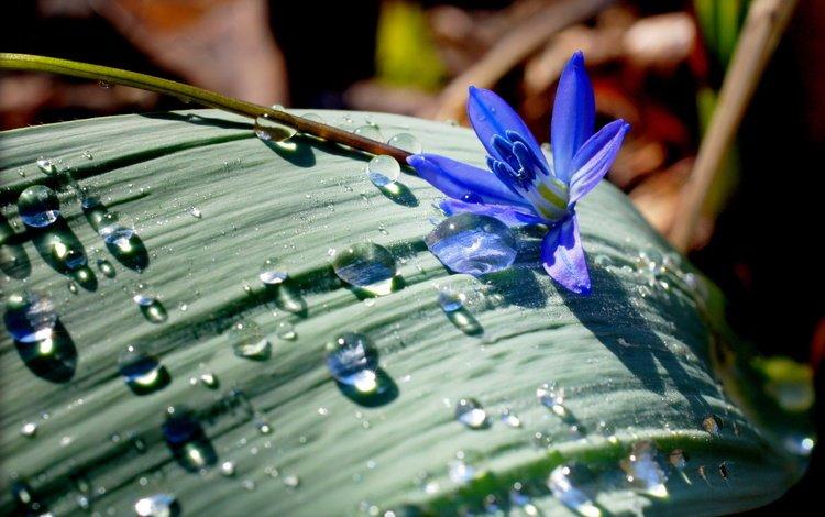 цветок, капли, лист, flower, drops, sheet