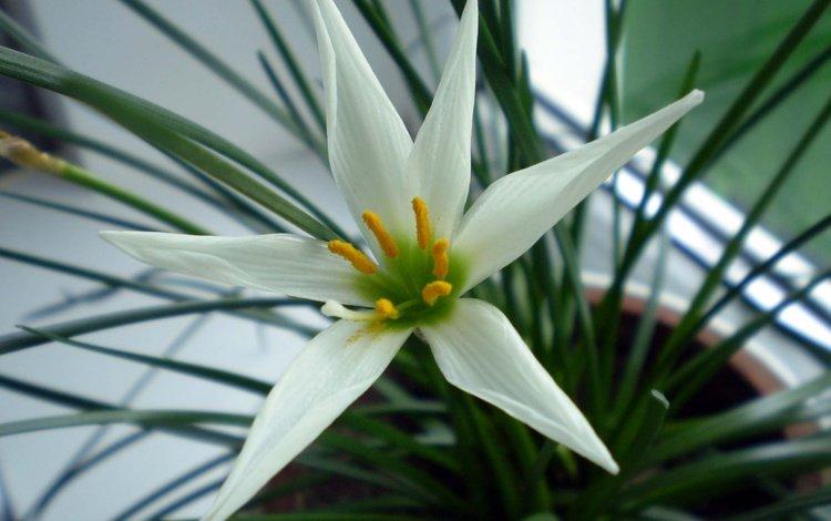 белый цветок, white flower