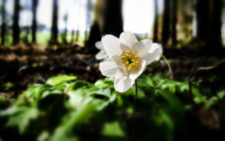 cvetok, lesnoj, belyj motylek