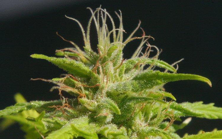 makro, rastenie, zelyonoe