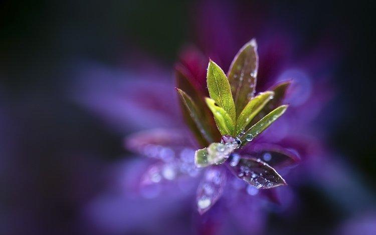 макро, капли, лепестки, растение, macro, drops, petals, plant