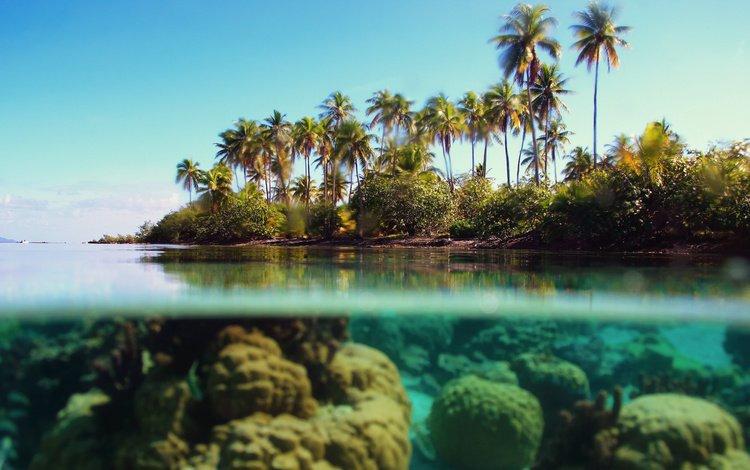 море, пальмы, под водой, тропики, sea, palm trees, under water, tropics