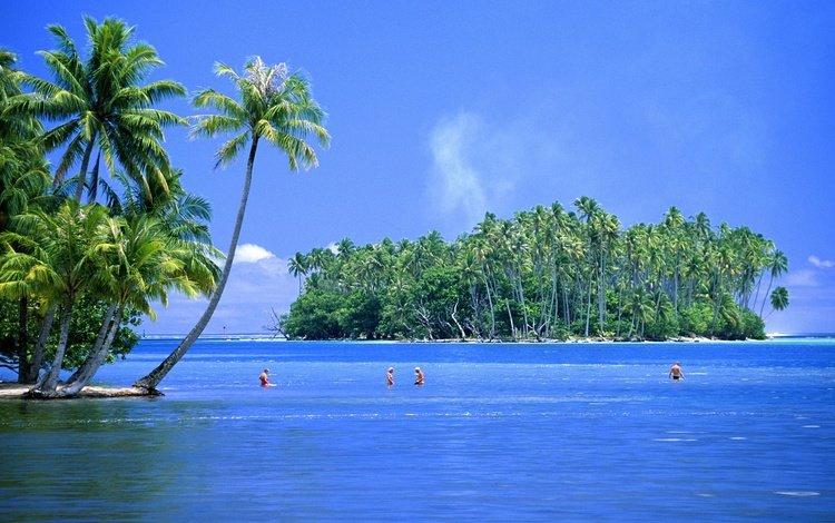 пальмы, остров, тропики, palm trees, island, tropics