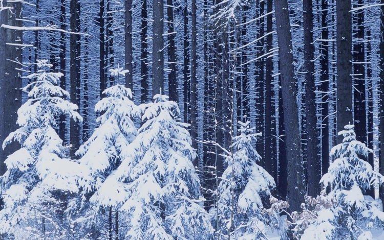 зима, winter