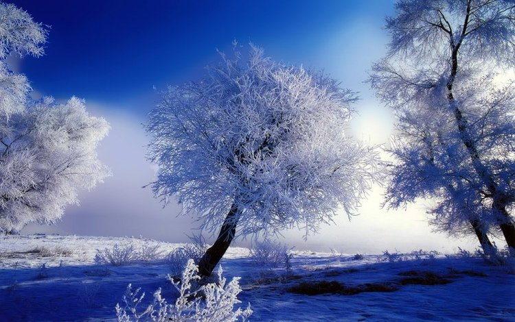 trees, snow, winter, blue, frost, white