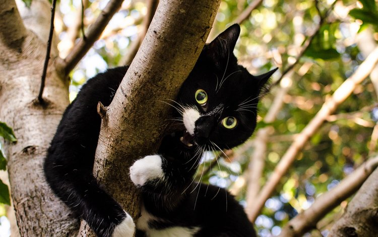 дерево, кот, кошка, взгляд, зубы, чёрно-белый, tree, cat, look, teeth, black and white