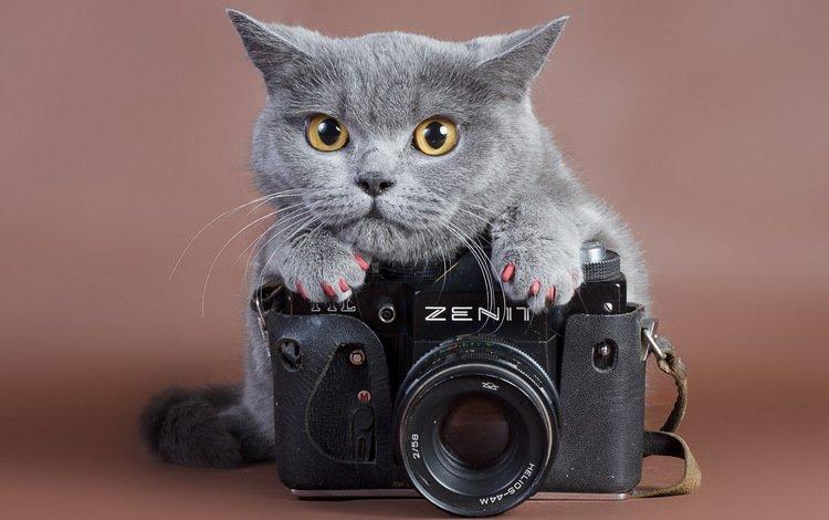 кот, кошка, камера, ноготки, cat, camera, marigolds