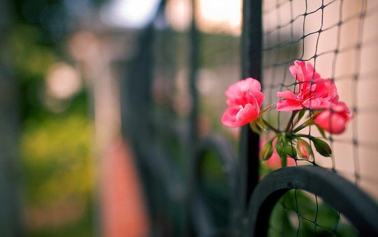 цветы, макро, забор, сетка, flowers, macro, the fence, mesh