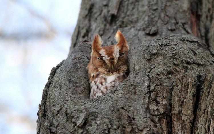 сова, природа, дерево, птица, филин, дупло, owl, nature, tree, bird, the hollow