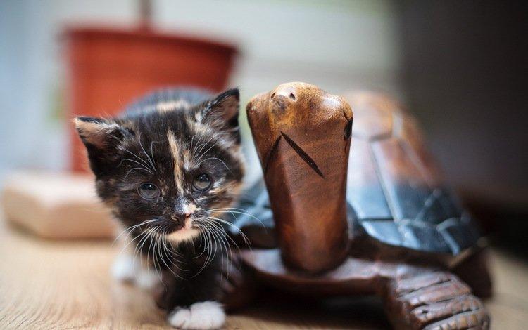 кошка, взгляд, котенок, черепаха, деревянная, cat, look, kitty, turtle, wooden