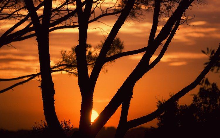небо, деревья, солнце, закат, the sky, trees, the sun, sunset