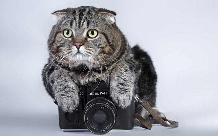 кот, кошка, фотоаппарат, зенит, камера, полосатый, cat, the camera, zenit, camera, striped