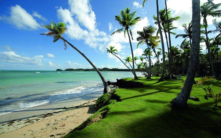 Берег океана и пальмы