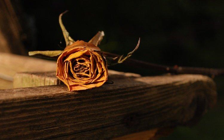 roza, zasoxshaya, pamyat