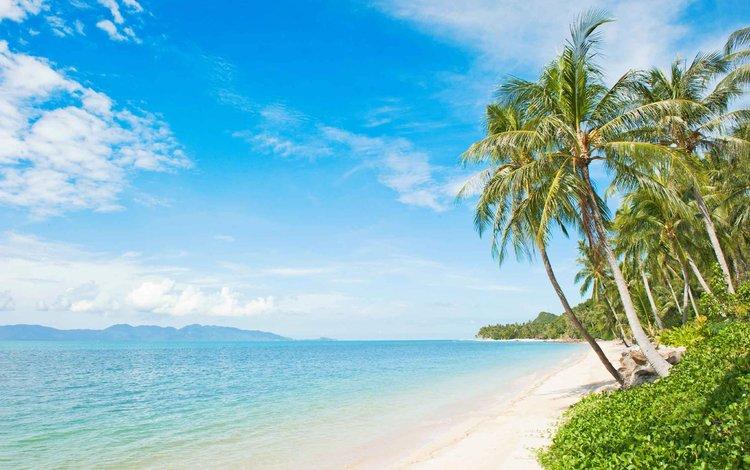 пляж, тропики, beach, tropics