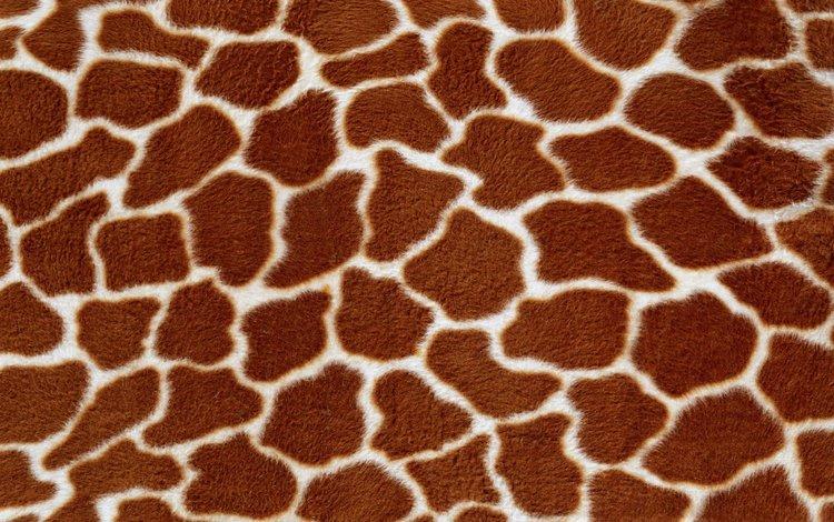 текстура, фон, жираф, мех, texture, background, giraffe, fur
