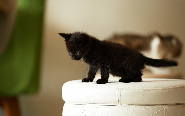 кошка, котенок, черный, малыш, наблюдает, пуфик, cat, kitty, black, baby, watching, ottoman
