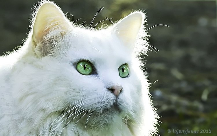 рисунок, кот, кошка, взгляд, белый кот, figure, cat, look, white cat