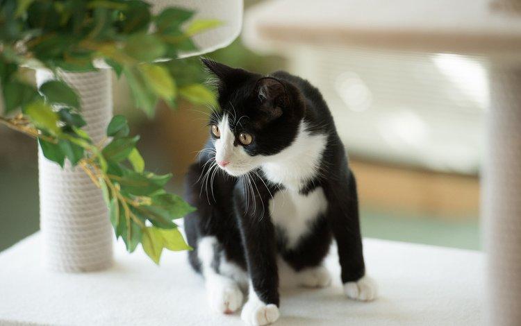 листья, кот, кошка, черно-белая, растение, черно-белый кот, leaves, cat, black and white, plant, black and white cat