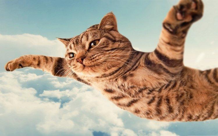летящий кот, flying cat