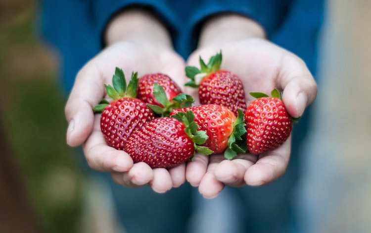 красная, клубника, ягоды, руки, ладони, red, strawberry, berries, hands, palm