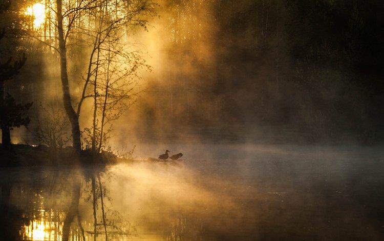 деревья, река, лес, утро, туман, рассвет, птицы, trees, river, forest, morning, fog, dawn, birds