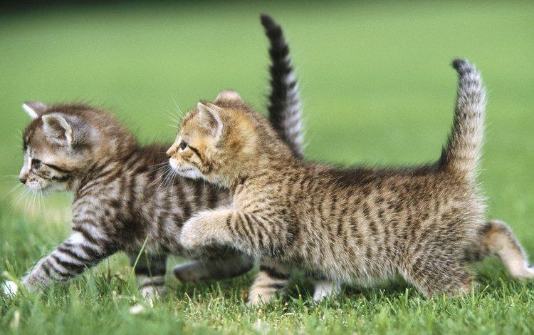 фото, котята, картинки, photo, kittens, pictures