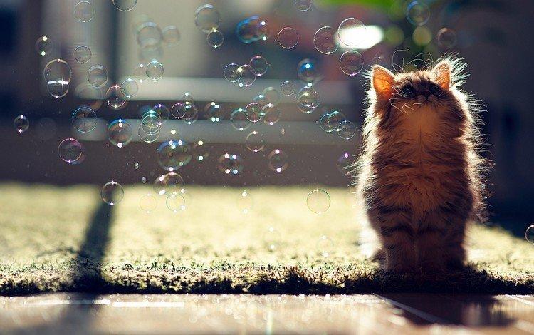 кот, пузыри, и, cat, bubbles, and