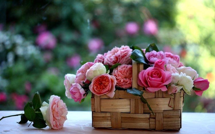 розы, корзинка, лукошко, c elena di guardo, roses, basket