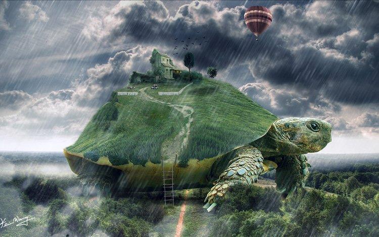 арт, лестница, черепаха, дом, дождь, гигантская, art, ladder, turtle, house, rain, giant
