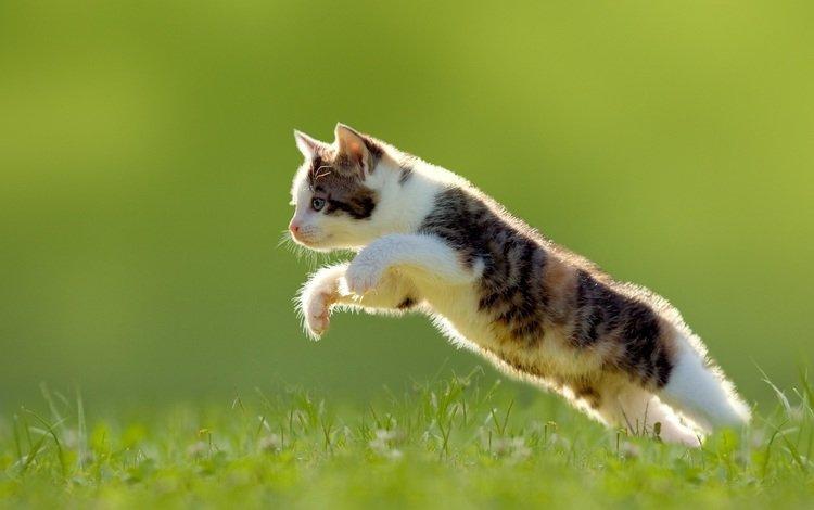 прыжок, jump