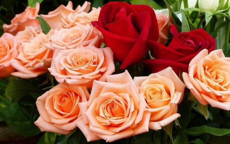 бутоны, розы, букет, buds, roses, bouquet