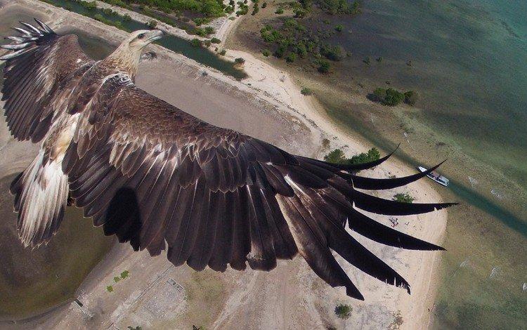 орел, летящий, над, землей, eagle, flying, over, land