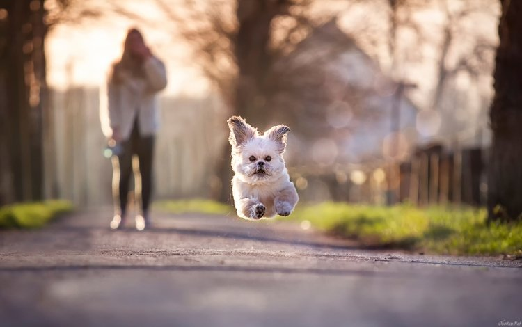 собака, несется, от, хозяйки, dog, rushing, from, mistress