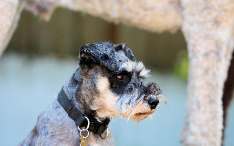 собака, друг, ошейник, dog, each, collar