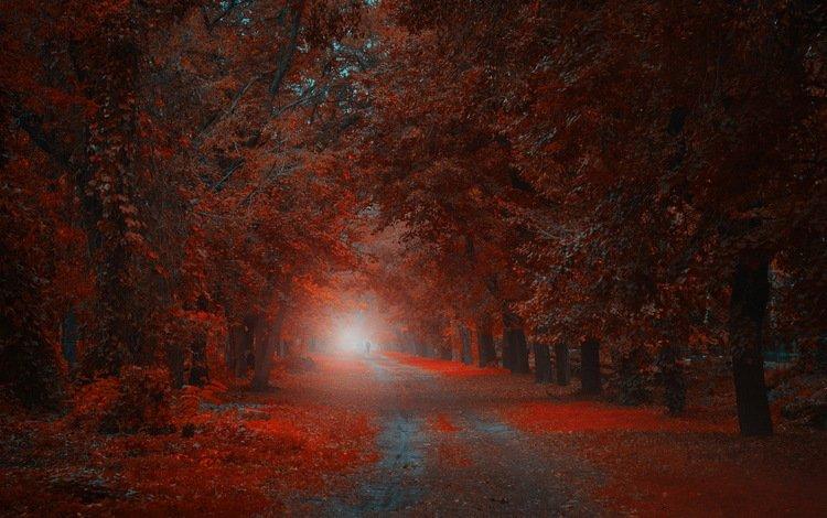природа, парк, осень, nature, park, autumn