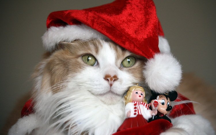 фон, кошка, шапка, праздник, киса, background, cat, hat, holiday, kitty
