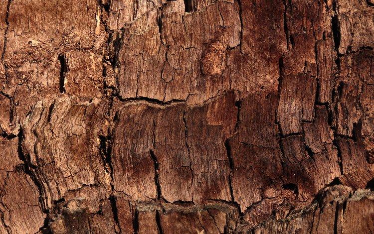 дерево, текстура, кора, tree, texture, bark