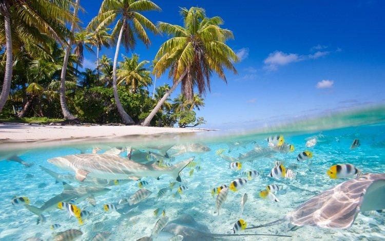 пейзаж, рыба, коллаж, рыбки, акула, пальмы, океан, под водой, остров, тропики, скат, landscape, collage, fish, shark, palm trees, the ocean, under water, island, tropics, skat