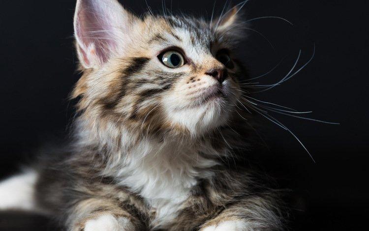 глаза, фон, взгляд, котенок, eyes, background, look, kitty