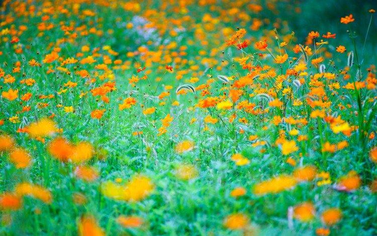 цветы, трава, природа, луг, flowers, grass, nature, meadow