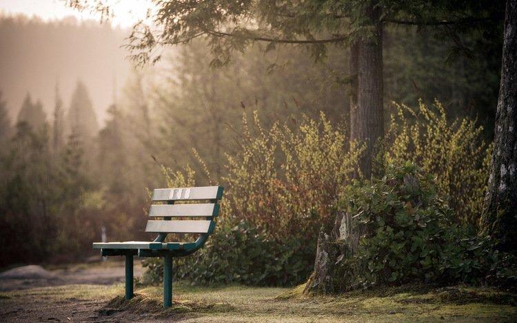 парк, город, скамья, park, the city, bench