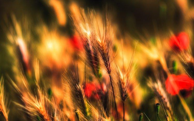 цветы, трава, природа, поле, луг, flowers, grass, nature, field, meadow