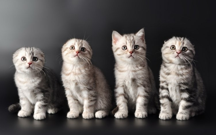 кошки, котята, милые, cats, kittens, cute
