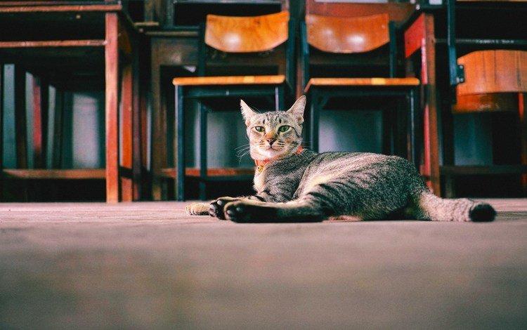 кошка, взгляд, стул, cat, look, chair