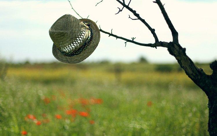 небо, дерево, настроение, фон, поле, шляпа, the sky, tree, mood, background, field, hat
