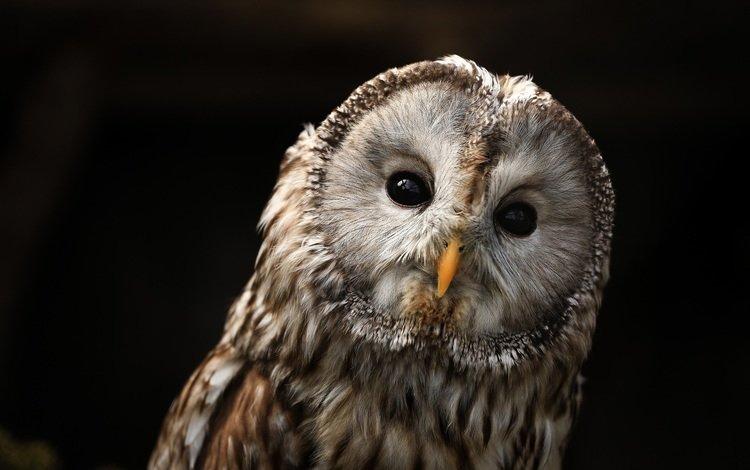 глаза, сова, птицы, клюв, eyes, owl, birds, beak